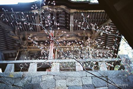 05榛名神社_双龍門-000024