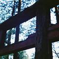 写真: 秋葉神社_2の鳥居_film-010025