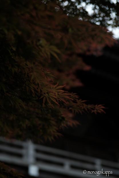 写真: 小川寺_紅葉-4292