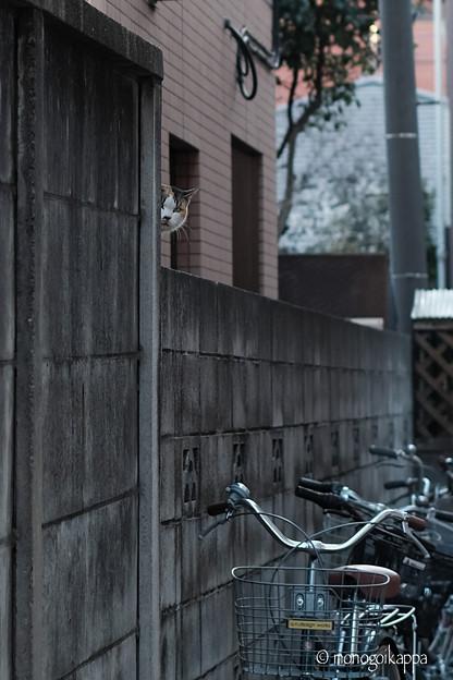 写真: 猫が見てた!-2927