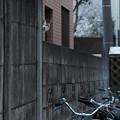 Photos: 猫が見てた!-2927