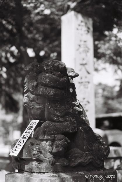 船橋大神宮_のぼらないこと_LeicaM6_Nokton50mm_ORIENTAL SEAGULL100-000010
