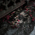 写真: サルスベリ-5810