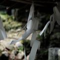 写真: 十二所神社_03渡る風-5816