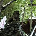写真: 十二所神社_04狛犬-5817