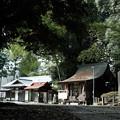 写真: 飯能恵比寿神社-6086