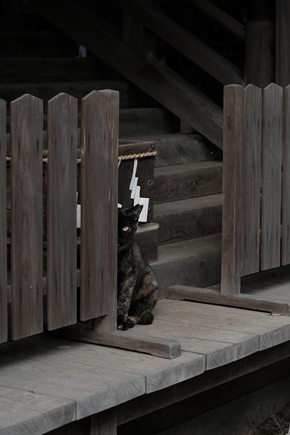 写真: 飯能恵比寿神社-6093
