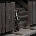 飯能恵比寿神社-6093