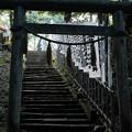 写真: 飯能恵比寿神社-6101