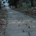 新府城05_本丸への階段-7085