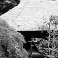 モノクロ 庭の向こうから。。20120630