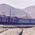 Photos: 大井川鐵道SLフェスタ。。臨時列車EL電車機関車で客車引っ張る