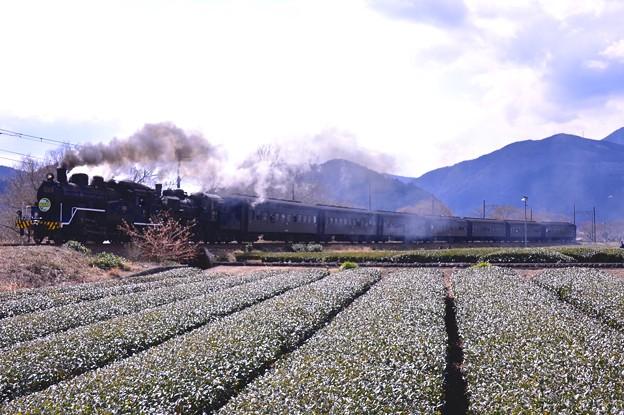 Photos: 大井川鐵道SLフェスタの目玉。。SL重連走行 茶畑を快走