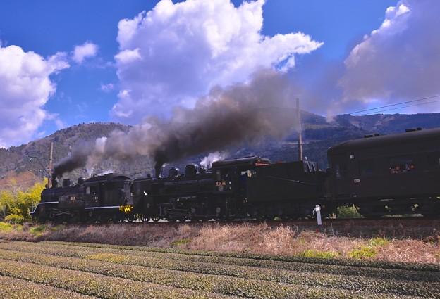 大井川鐵道。。青空の下 SL重連走行。。茶畑抜けて