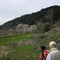 Photos: 撮って出し。。まだ満開ではなかったいすみ鉄道総元の桜トンネル 4月10日