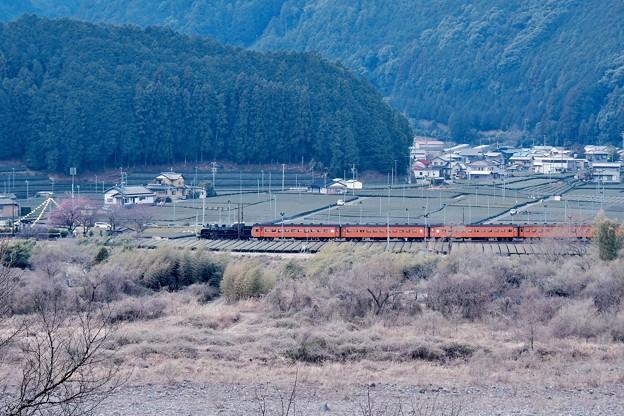 大井川鐵道の風景。。SLの警笛がこだまする