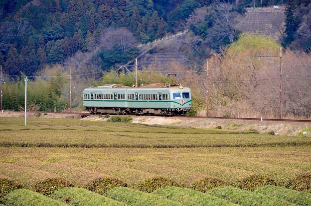 大井川鐵道 抜里駅の茶畑を走る元南海ズームカー
