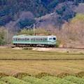 Photos: 大井川鐵道 抜里駅の茶畑を走る元南海ズームカー