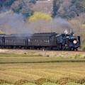 大井川鐵道 SL 抜里の茶畑を駆け抜けて