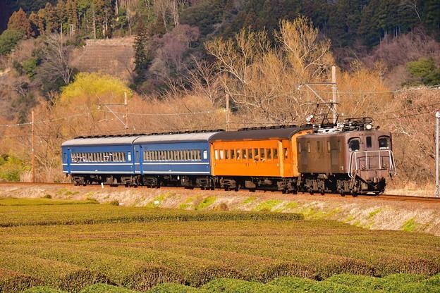 夕暮れの抜里の茶畑を走るEL電気機関車臨時列車。。