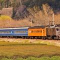 Photos: 夕暮れの抜里の茶畑を走るEL電気機関車臨時列車。。