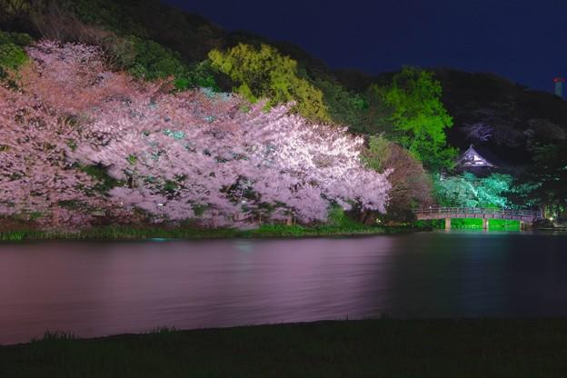夜の三渓園の夜桜。。静寂な夜 20170402