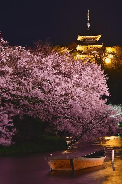 少し風が弱まる夜。。夜桜と金色の三重塔 20170402