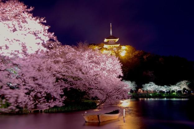 夜になって輝く金色の三重塔とライトアップされた夜桜20170402