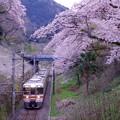 日暮れの御殿場線普通列車。。サクラのトンネル抜けて。。20170410