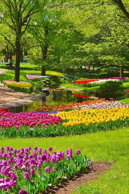 緑と調和した昭和記念公園チューリップ 20170423