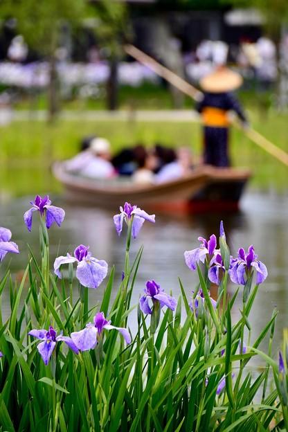 水辺の花菖蒲見ながら乗る渡瀬舟 20170611