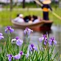 写真: 水辺の花菖蒲見ながら乗る渡瀬舟 20170611