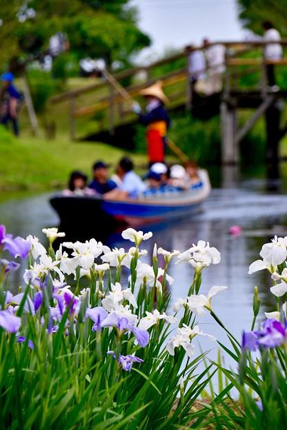 水辺も賑わい渡瀬舟と花菖蒲。。20170611