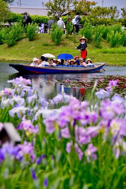 若い船頭さんの渡瀬舟と花菖蒲畑 20170611