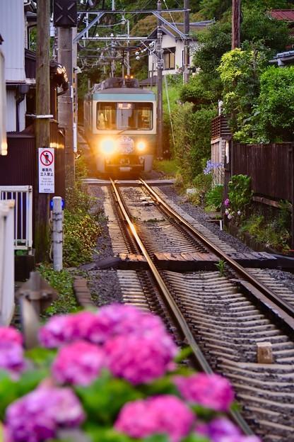 江ノ電長谷駅付近の綺麗な紫陽花。。電車お迎え 20170625