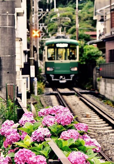 行き違いした藤沢行き電車と紫陽花。。20170625