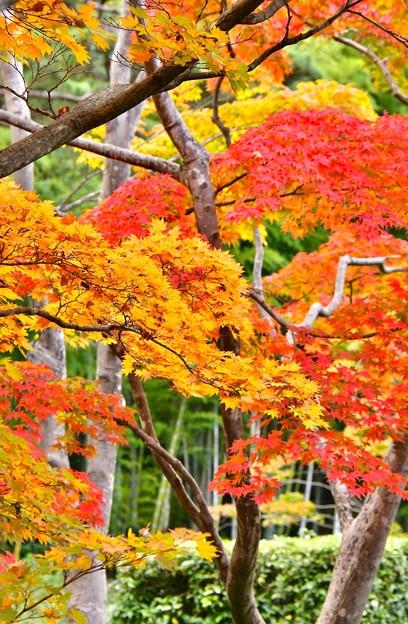 撮って出し。。東京まだまだだと思ってたら立派な色付きに(^_^;) 11月5日