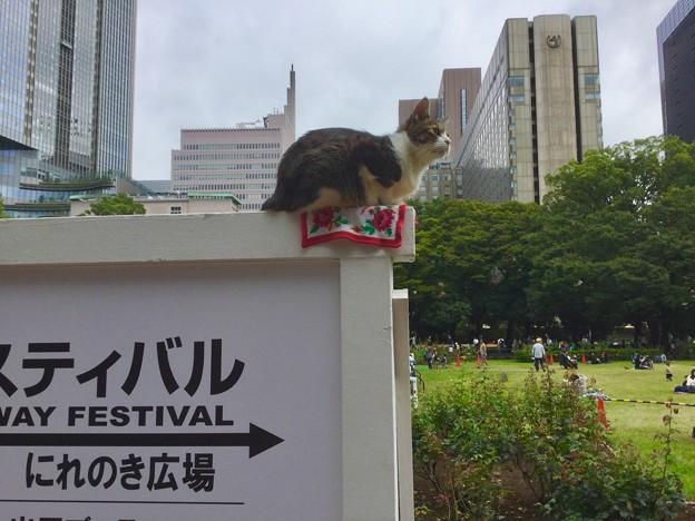 日比谷公園で休んでる猫。。高いところお好き?(^^) 20171007