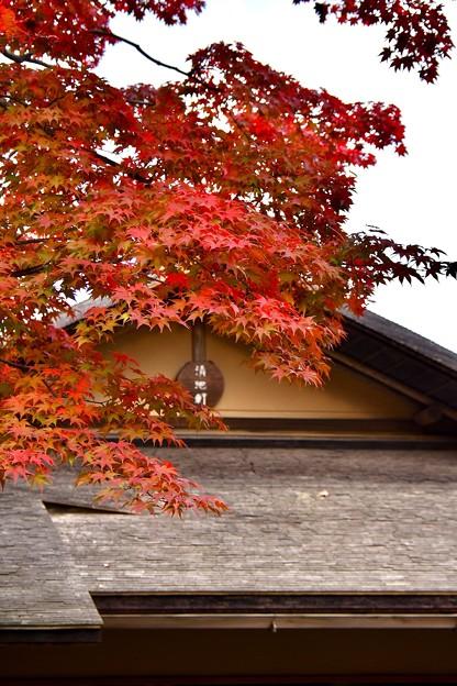 昭和記念公園日本庭園 東屋 色づく紅葉 20171104