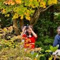 1人夢中に色づく紅葉を撮って女子。。20171104