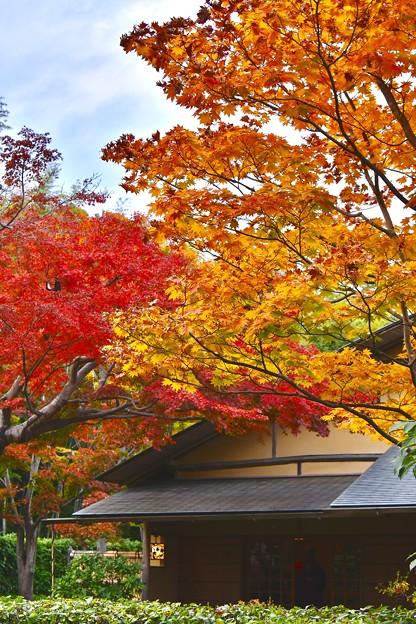 赤やオレンジな色づく紅葉。。昭和記念公園 20171104