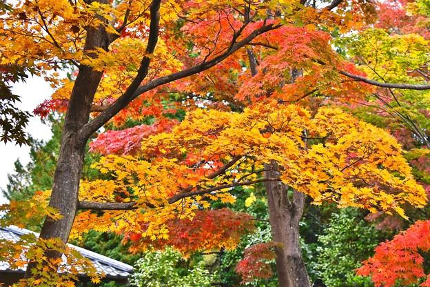赤やオレンジに染まる。。紅葉 昭和記念公園 日本庭園 20171104