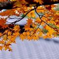 まるで京都に来た気分に。。(^^)昭和記念公園 20171104