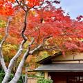 お茶屋と色づいた紅葉。。昭和記念公園日本庭園 20171104