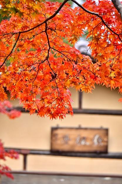 真っ赤な紅葉と東屋 昭和記念公園日本庭園 20171104