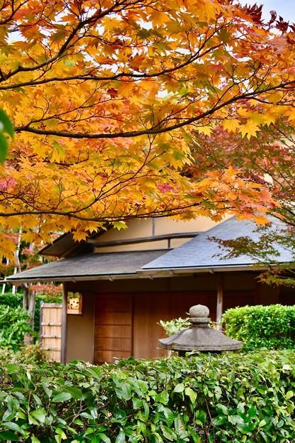 紅葉見ながら和菓子とお茶で休憩(^^) 20171104