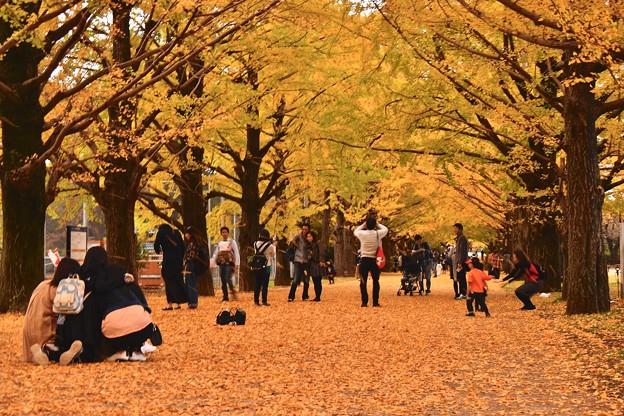 昭和記念公園のいちょう並木の様々なひと時 20171104