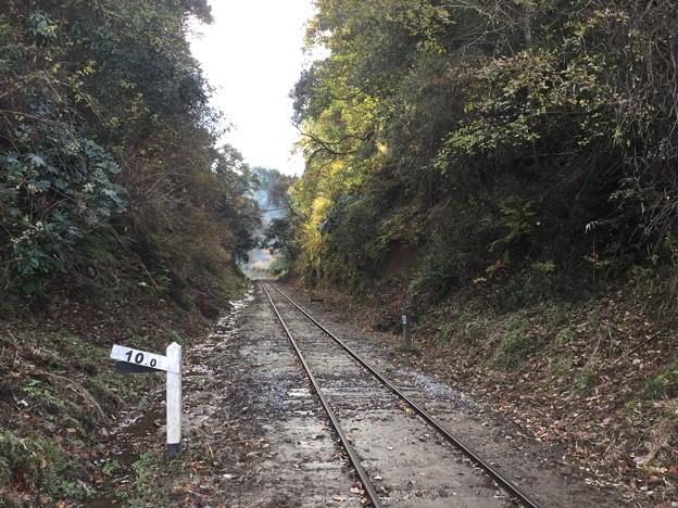 撮って出し。。まるで森の鉄道。。小湊鉄道12月10日