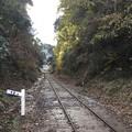 写真: 撮って出し。。まるで森の鉄道。。小湊鉄道12月10日