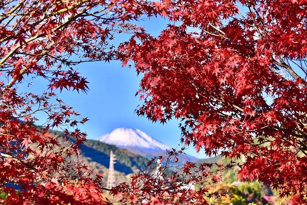 真っ赤な色づいた紅葉と白い化粧した富士山 20171112